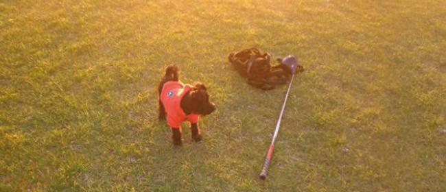 Golfen mit Hund, Golf und Hund, Hunde auf dem Golfplatz